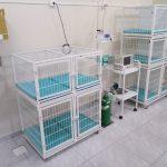 Royal Pet - Sala de internamento 03
